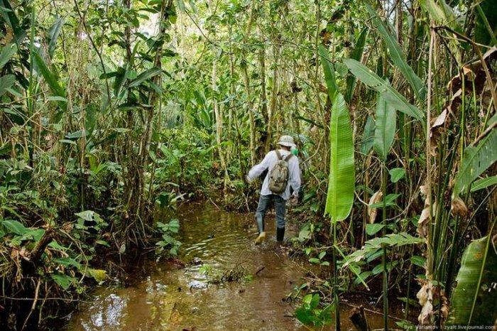 Чем питаться в джунглях (9 фото)
