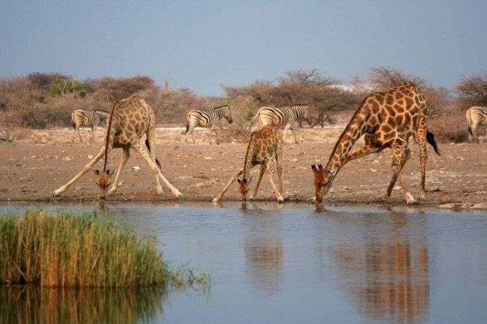Африка (19 фото)