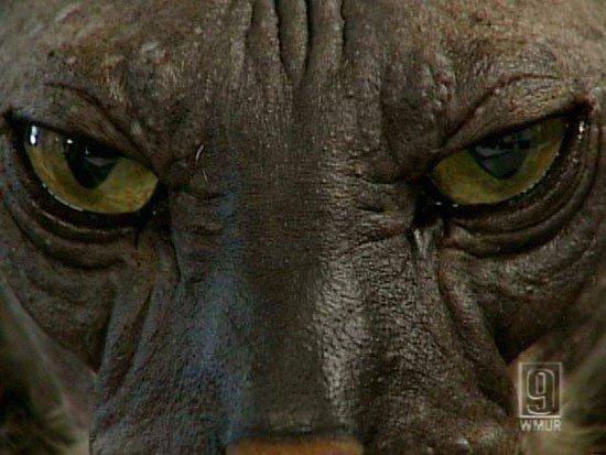 Страшный котик (7 фото)