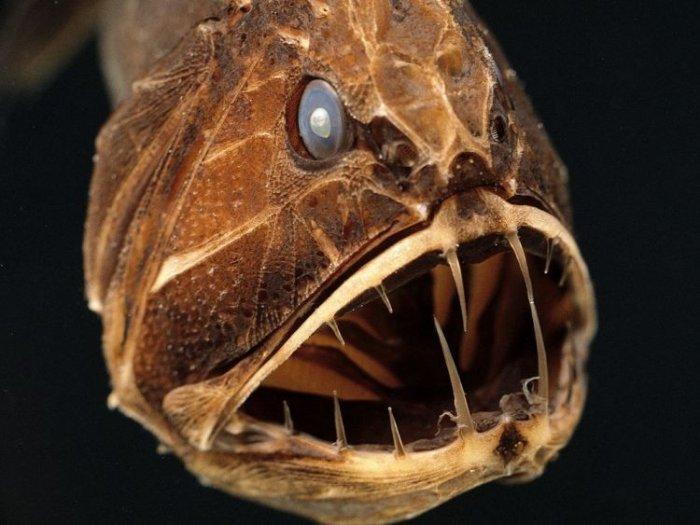 Страшные рыбки (27 фото)