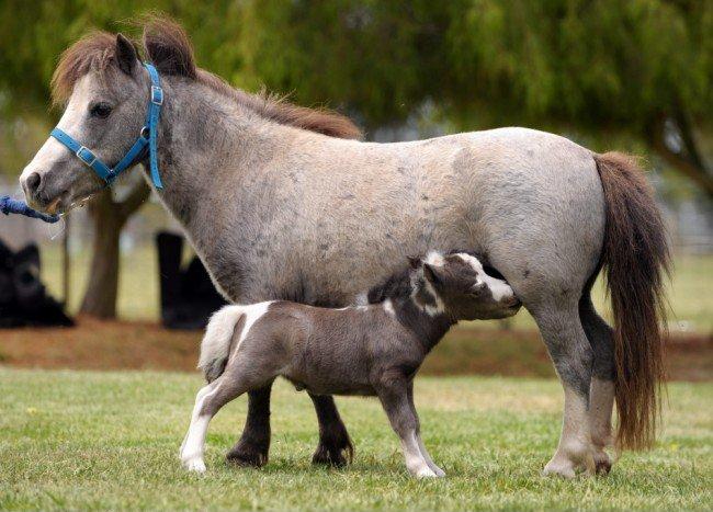Маленькая лошадка (5 фото)
