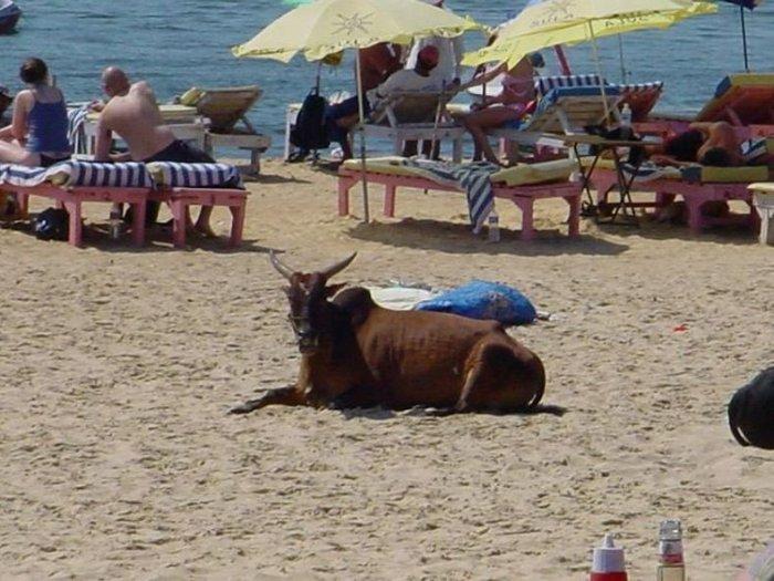 Пляжи Гоа (34 фото)