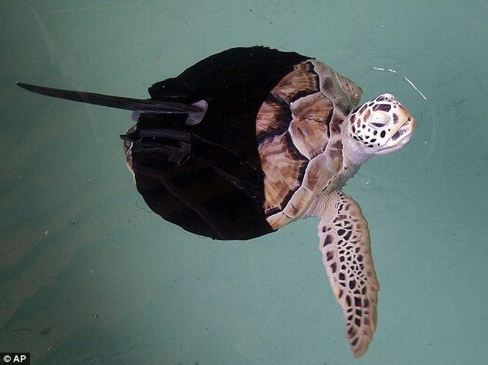 Как спасли черепашку (3 фото)