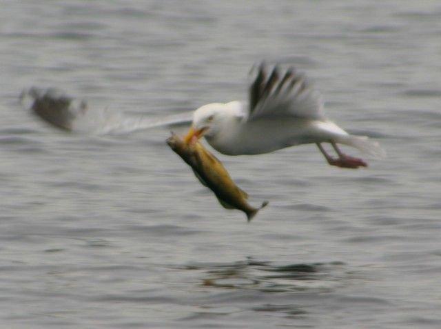 Охота и рыбалка у животных (23 фото)