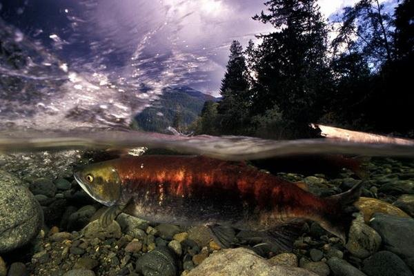 Мир под водой (12 фото)