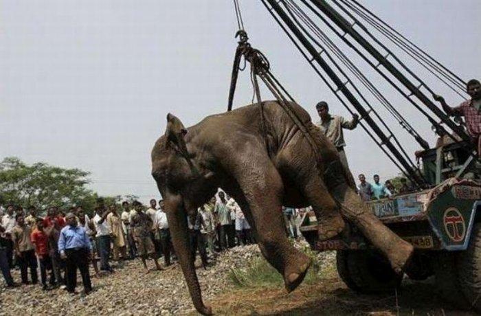 Спасение слона (6 фото)