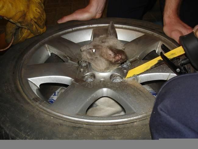 Кот застрял в колесе (5 фото)