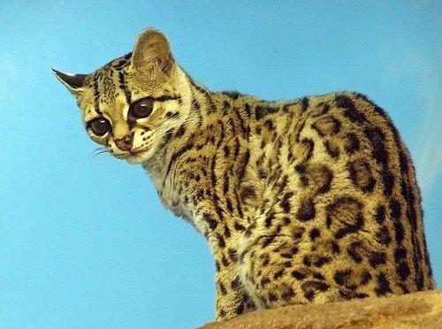 Классный котик (12 фото)