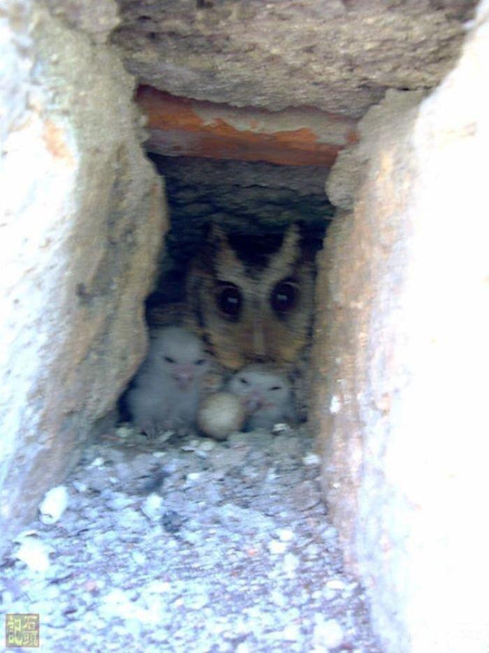 Угадайте, кто живет в этой дыре (12 фото)