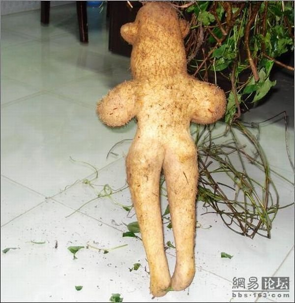 Овощ (5 фото)