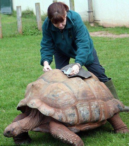Новый панцирь для черепахи (2 фото)
