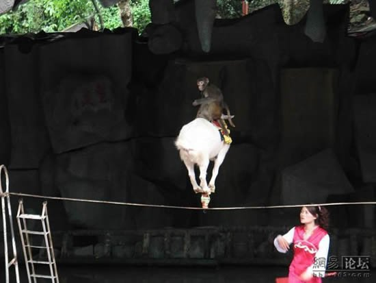 Козел-акробат (6 фото)