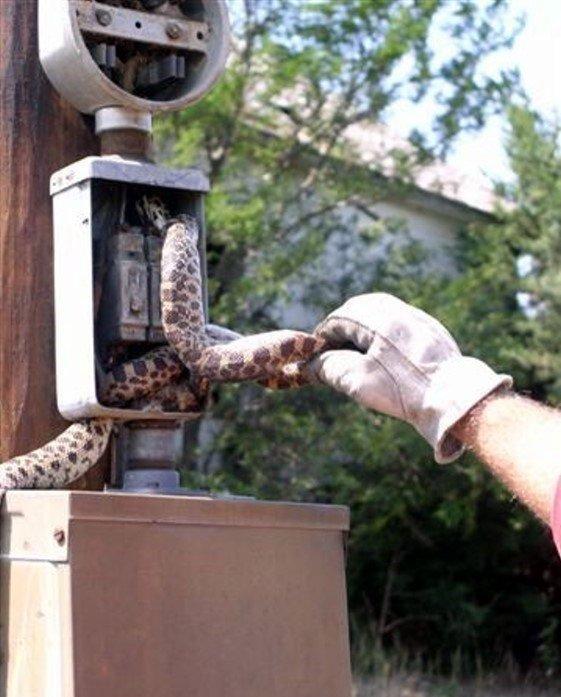 Змея увлеклась погоней (5 фото)