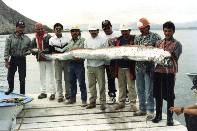 Длинная рыбка (20 фото)