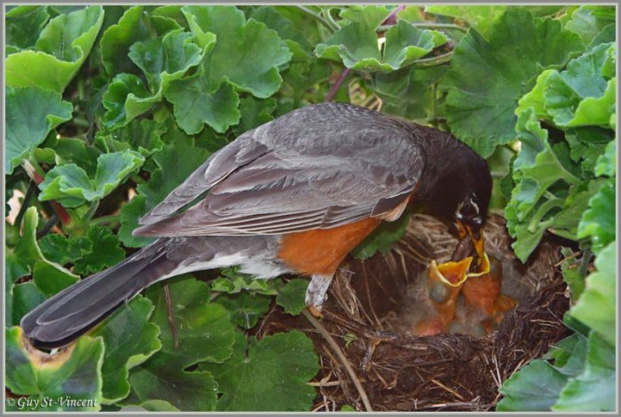 Рождение птенцов (13 фото)