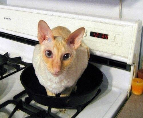 Готовим котов (6 фото)