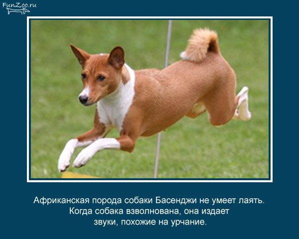 Факты о животных (25 фото)