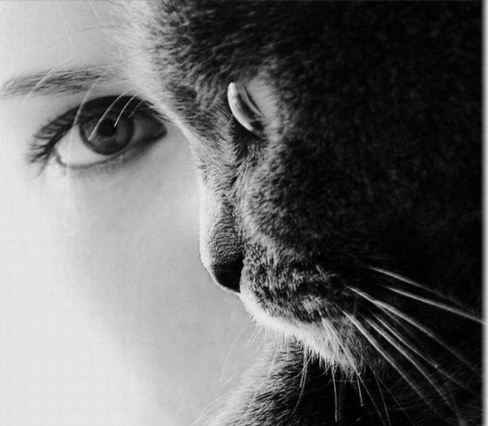 Девушки и кошки (20 фото)