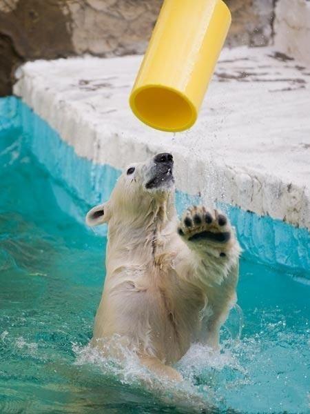 Позитивный медведь (6 фото)