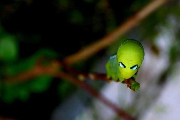 Странные насекомные (16 фото)