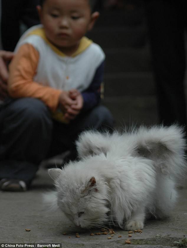 Крылатый кот (5 фото)