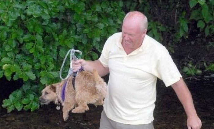 Собака-верхолаз (6 фото)
