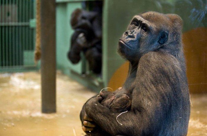 Жизнь в зоопарке (37 фото)