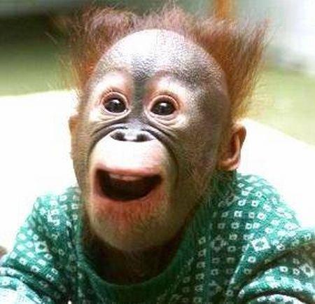 Мордахи у обезьян (15 фото)