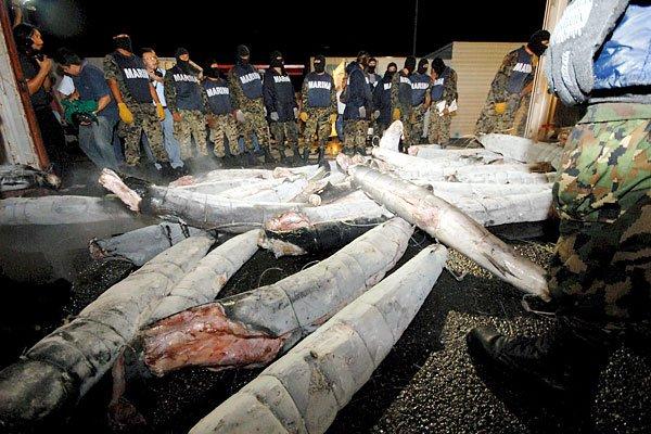 Кокаиновые акулы (9 фото)