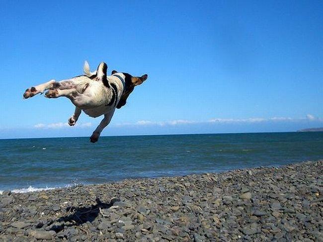Зверушки летают (28 фото)