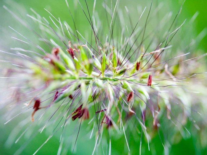 Красивейшие макрофотографии природы (20 фото)