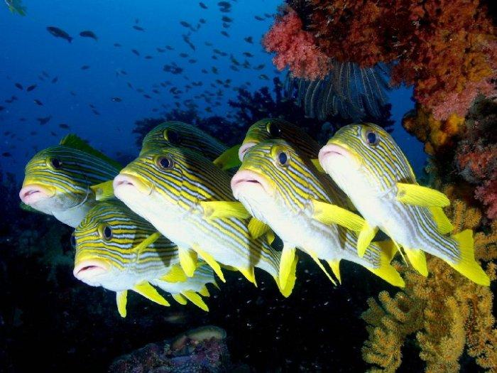 Морские создания (50 фото)