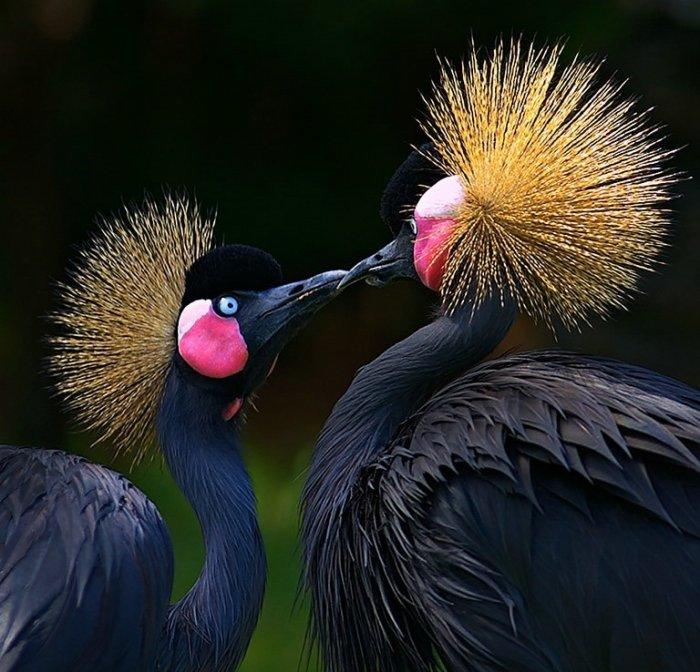 Классные фотографии птиц (20 фото)
