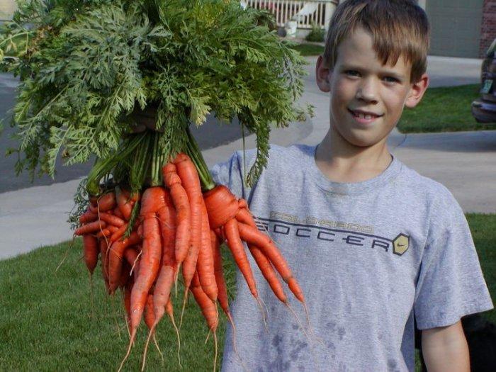 Необычная морковка (6 фото)
