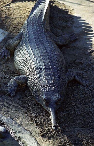 Необычные существа (44 фото)