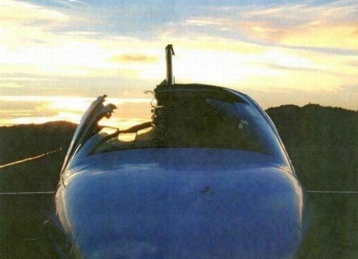 Птицы и самолеты (25 фото)