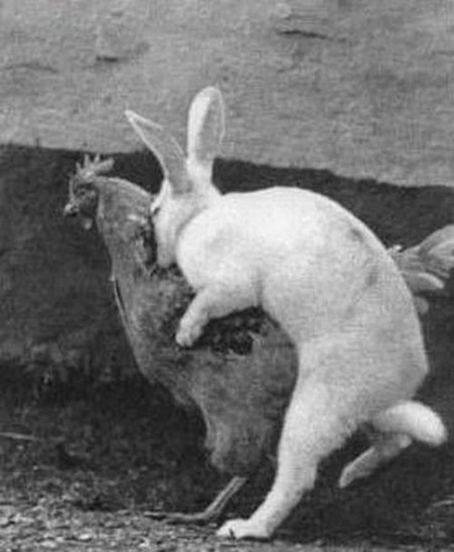 Забавные животные (39 фото)