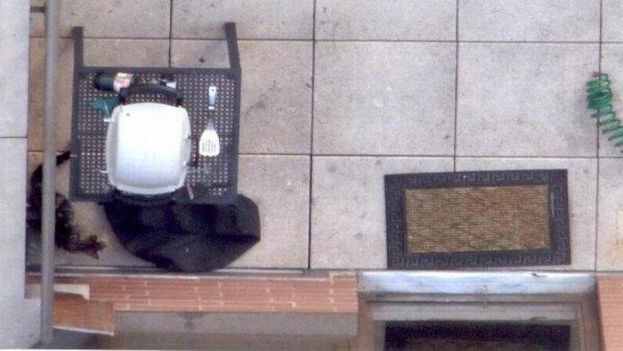 Везучий кот (5 фото)