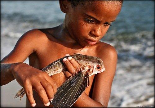 Летучая рыба (5 фото + видео)