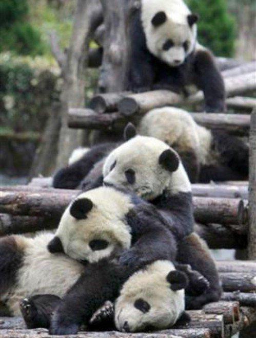 Зверушки спят (18 фото)