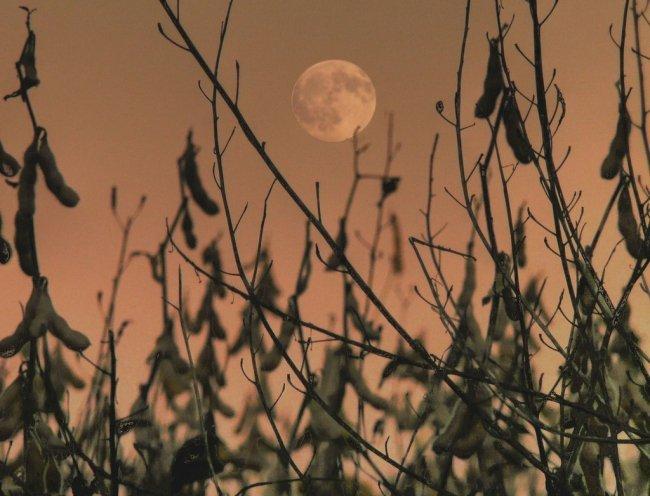 Красивые снимки луны (20 фото)