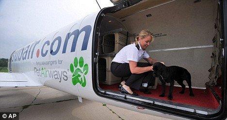 Самолет для собак (4 фото)