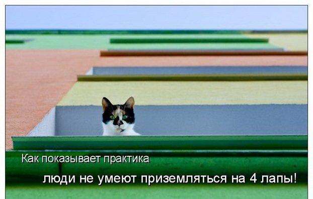 Прикольные картинки животных с подписями (70 фото)