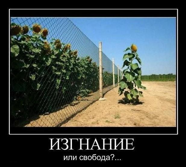 Фотоподборка среды! (92 фото)
