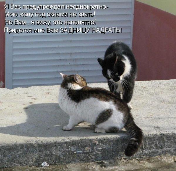 Прикольные картинки животных с подписями. Часть 2 (50 фото)