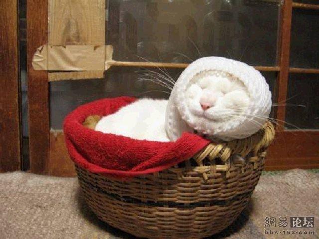 Кот, который любит спать (20 фото)