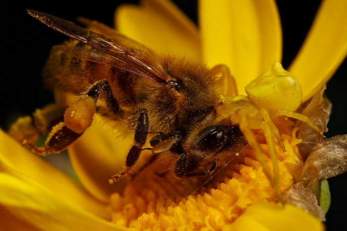 Красивейшие макроснимки насекомых (15 фото)