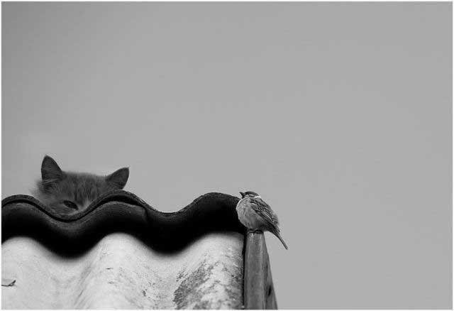 Прикольные зверушки (40 фото)