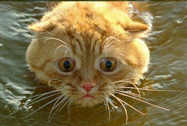 Котик испугался (4 фото)