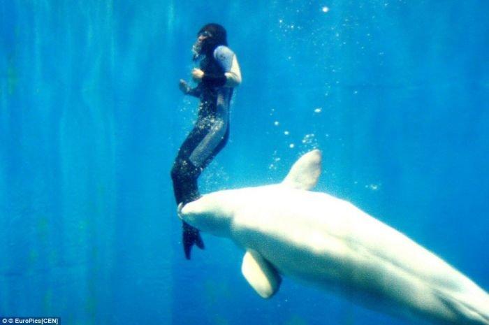 Дельфин спас человека (3 фото)